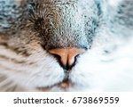 nose and mouth of a cat  close... | Shutterstock . vector #673869559