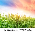 green wheat field landscape | Shutterstock . vector #673876624