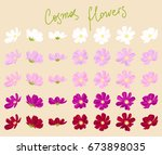 Vector Set Of Cosmos Flowers O...