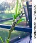 spring caterpillar climbing... | Shutterstock . vector #673900027