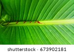 Small photo of Palm leaf opening.