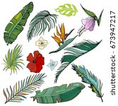 hand drawn vector tropical set. ... | Shutterstock .eps vector #673947217