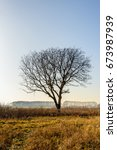 Small photo of Silhouette of bare tree with erratic shaped branches in the foreground in a rural area in a Dutch polder. It is in the end of the winter season.