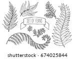 doodle set of ferns. sketch... | Shutterstock .eps vector #674025844