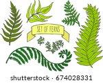 colorful doodle set of ferns.... | Shutterstock .eps vector #674028331