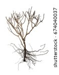 dry tree and bare root isolated ... | Shutterstock . vector #674040037