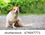 a dog try to scratching its... | Shutterstock . vector #674047771