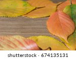 amazing autumn leaves... | Shutterstock . vector #674135131