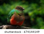 golden headed quetzal ... | Shutterstock . vector #674144149