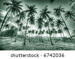 tropical palm trees in the... | Shutterstock . vector #6742036