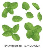 mint leaf set. realistic vector ... | Shutterstock .eps vector #674209324