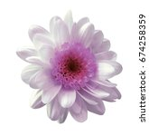 white pink flower chrysanthemum.... | Shutterstock . vector #674258359