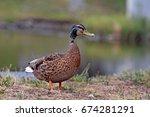 duck home | Shutterstock . vector #674281291