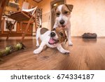 Stock photo playful dogs indoors at home 674334187