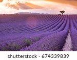 valensole plateau  lavender... | Shutterstock . vector #674339839