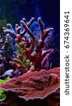 Small photo of Colorful montipora sps corals