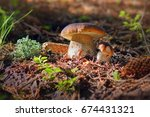 lovely pair of fresh edible... | Shutterstock . vector #674431321
