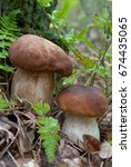 Small photo of Two mushrooms growth in the forest. Porcini (Boletus edulis).