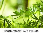 spring park | Shutterstock . vector #674441335