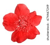 bright red flower isolated on...   Shutterstock . vector #674467249