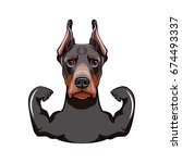 Pinscher Dog Face. Portrait Of...