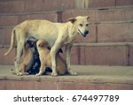 A Homeless Dog Feeds Puppies O...