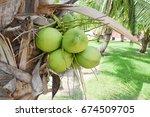 coconut tree | Shutterstock . vector #674509705