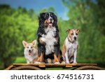 Stock photo group of three trained dogs in summer 674516731