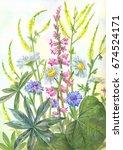 composition of watercolor wild...   Shutterstock . vector #674524171
