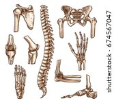 bone and joint of human... | Shutterstock .eps vector #674567047