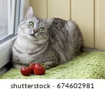 cat relaxing in the terrace and ... | Shutterstock . vector #674602981