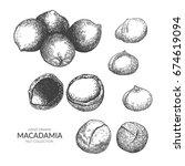 set of macadamia. hand drawn...   Shutterstock .eps vector #674619094