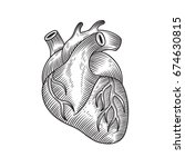human heart drawn in engraving... | Shutterstock .eps vector #674630815