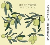 vector hand drawn olives... | Shutterstock .eps vector #674645197
