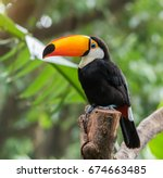 toucan bird on the forest | Shutterstock . vector #674663485