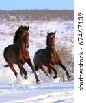 Two Horses Galloping In Winter...