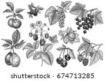 fruits and berries set. plums ... | Shutterstock .eps vector #674713285