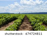 Cotton Rows With Irrigation...