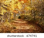Leafy path through the golden wood - stock photo
