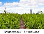 swamp area covered in swamp... | Shutterstock . vector #674860855