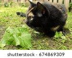 Black Calico Cat In Sunny Yard...