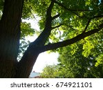 sunshine through the leaves and ... | Shutterstock . vector #674921101