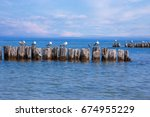 Sea Gulls Resting On Wooden...
