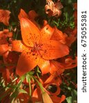 orange flower macro image... | Shutterstock . vector #675055381