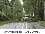 Many Fallen Trees On The Road...