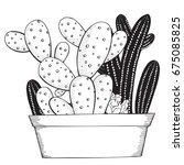 hand drawn set of succulents or ... | Shutterstock .eps vector #675085825