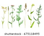 set of watercolor drawing wild... | Shutterstock . vector #675118495