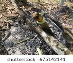 survival food in jungle | Shutterstock . vector #675142141