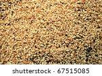 the barley seedlings - stock photo
