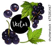 vector black currant... | Shutterstock .eps vector #675281467